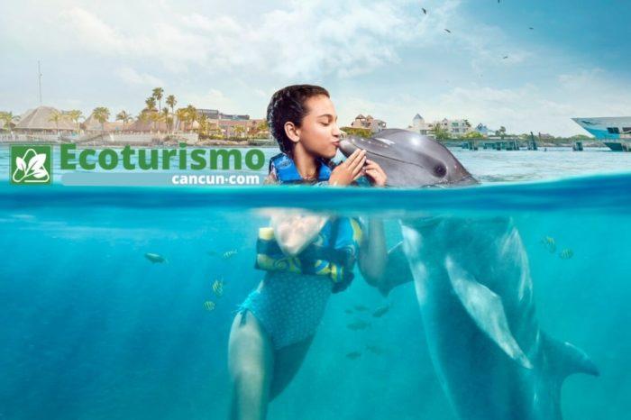 Royal Garrafón VIP y Nado con Delfines Premium