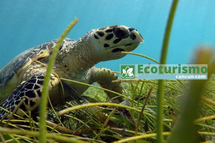 Snorkel en Isla Mujeres y Avistamiento de Tortugas