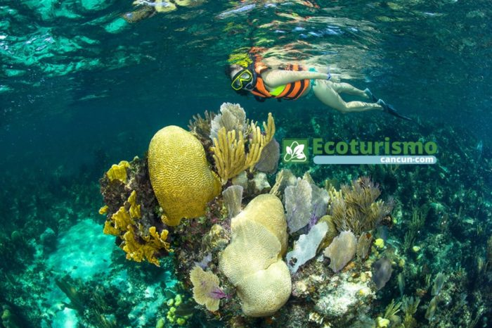 Snorkeling Adventure in Puerto Morelos