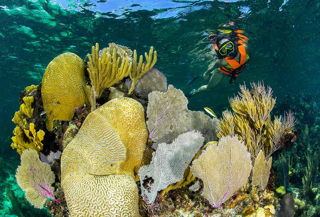 Snorkeling Adventure en Puerto Morelos